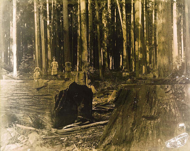 Three girls pose on a large log