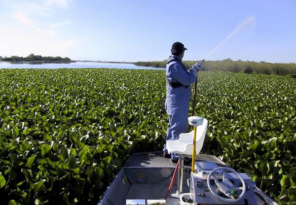 spraying-water-hyacinth-8-8-14-thumb-600x416-78890