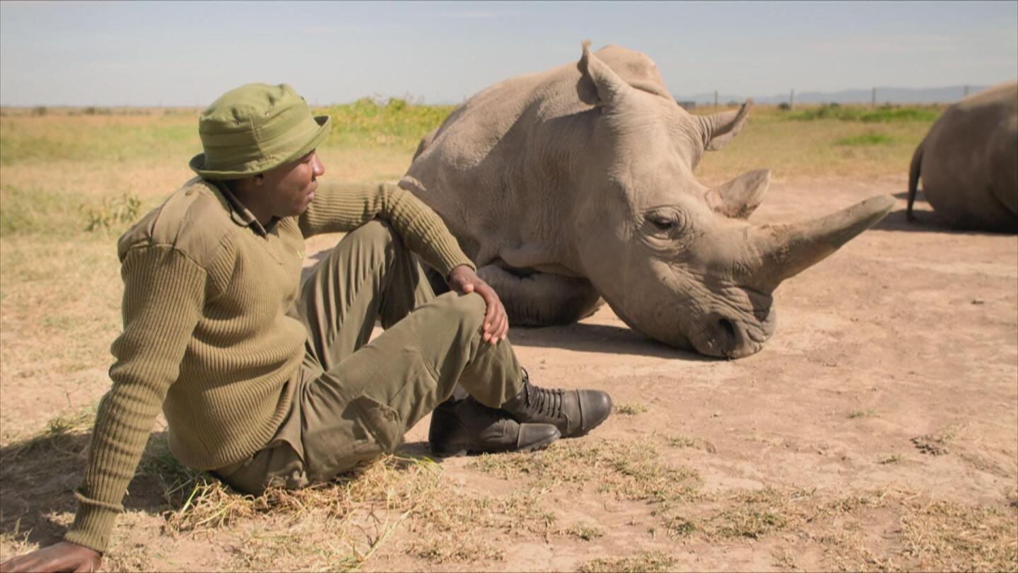 A man sits on the ground beside a rhinoceros.