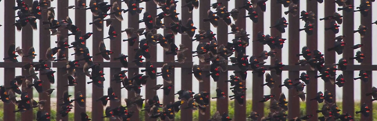redwings-border-wall-7-20-16.jpg