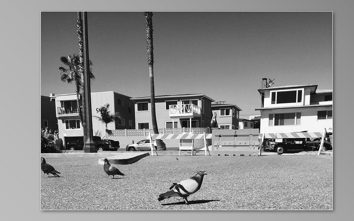 A black and white photo of a pigeon among palm trees by UCI Art photography student Brenna Chiaramonte. Taught by art professor Shelby Roberts. | Courtesy of UCI Claire Trevor School of the Arts